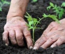 prtoecting your hands in the garden